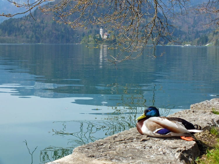 EVEN THE DUCKS WERE CHILLED OUT