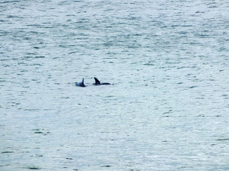 ....DOLPHINS!!!!